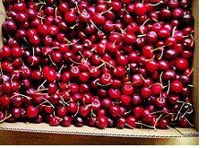 صادرات میوه آلبالو