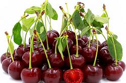 بازار میوه آلبالو